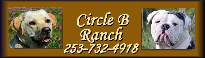 Circle B Ranch - Breeders of Labrador Retrievers and Olde English Bulldogges Resources Links Circle B Ranch Yelm, Washington.